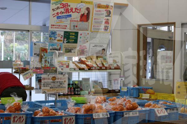 熊本道の駅上天草さんぱーるモリンガ販売