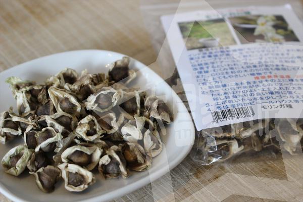 天草モリンガファームモリンガの種販売(育て方詳細)