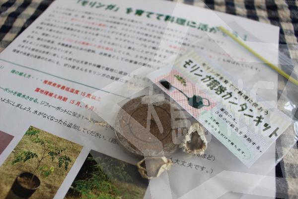 モリンガの育て方(モリンガ栽培簡単キット1)