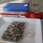 モリンガの種の植え方