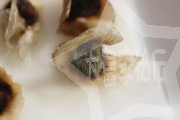 モリンガの種にカビ発生